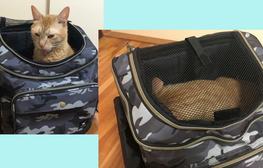 リュックキャリー口コミ猫上からの画像