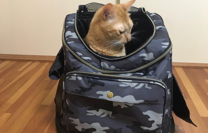 リュックキャリー口コミ迷彩柄猫の画像