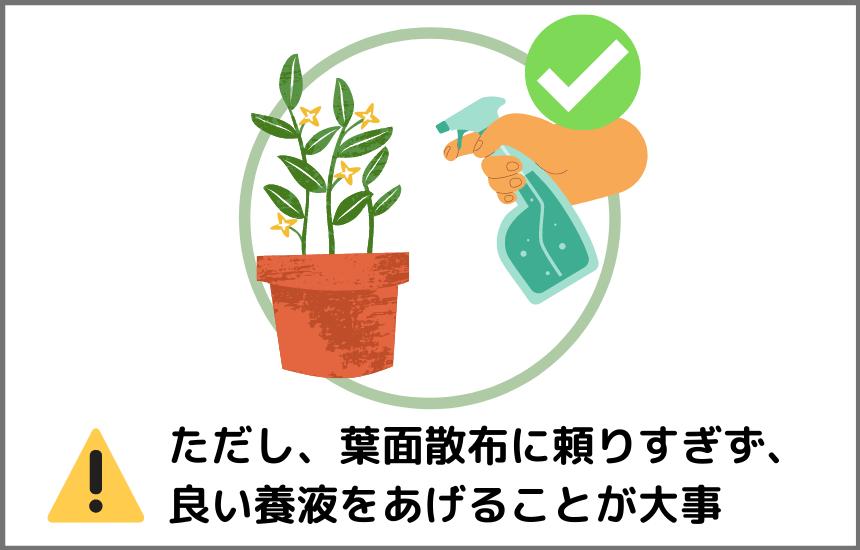 ハイポニカ液体肥料は葉面散布できる
