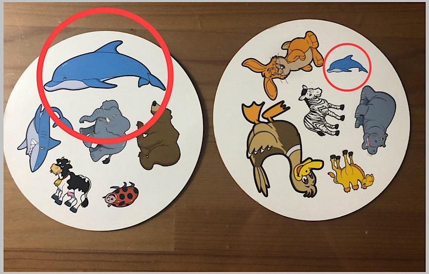 大きさの違う共通する動物