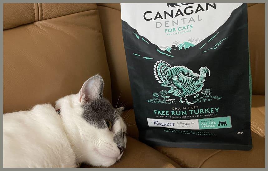 カナガンデンタルキャットフードと猫