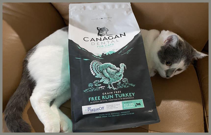 カナガンデンタルキャットフードと寝ている猫